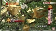 Taiwan Money Go TV Part 4  Famous fast food chain love to use  Food paper Packaging Stealth champion