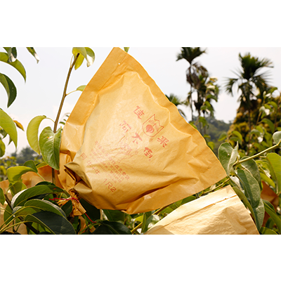 Pear Bag